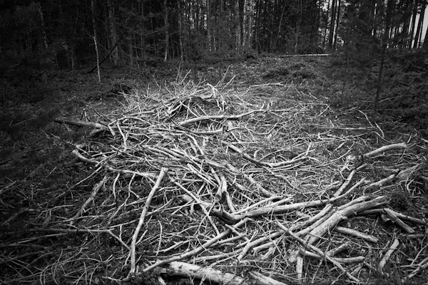 skogspinnar